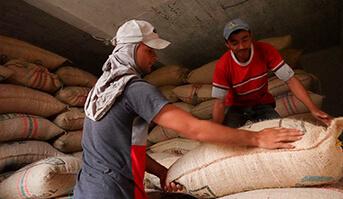 Producción de café colombiano alcanza 14,3 millones de sacos en últimos 12 meses